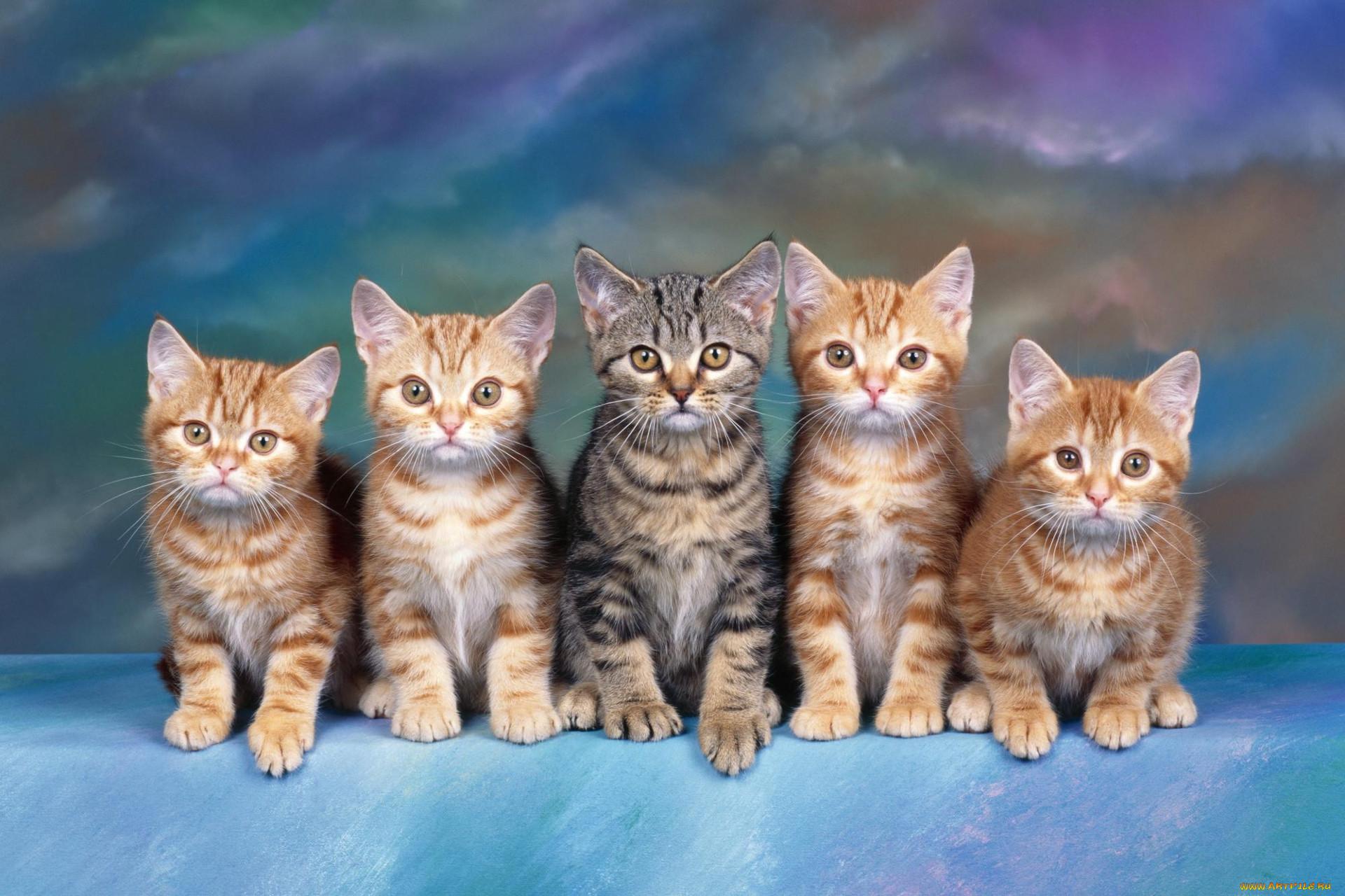 длинные картинки с котятами горечью увидела фото